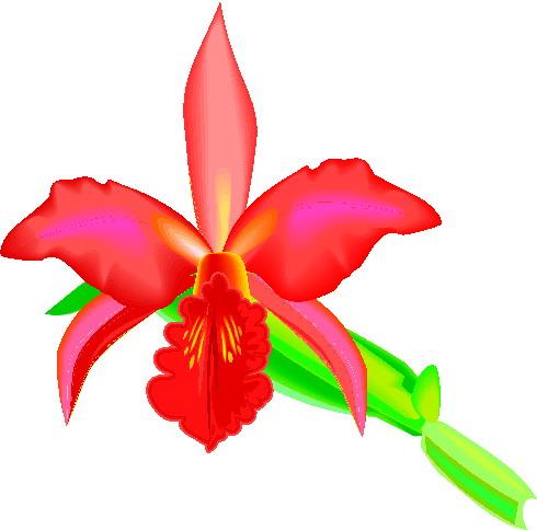 animiertes-orchidee-bild-0001