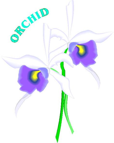 animiertes-orchidee-bild-0002