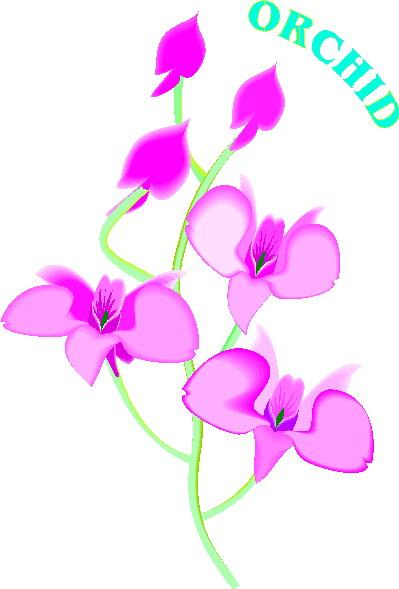 animiertes-orchidee-bild-0004