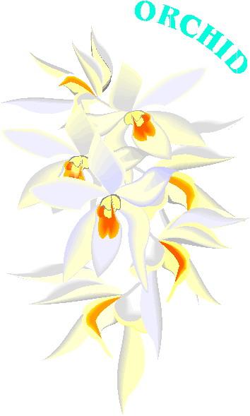animiertes-orchidee-bild-0005