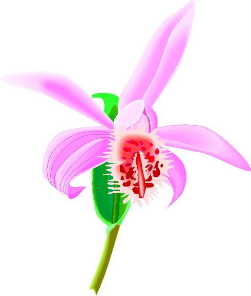 animiertes-orchidee-bild-0008