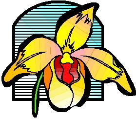 animiertes-orchidee-bild-0010
