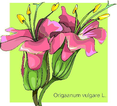 animiertes-orchidee-bild-0012