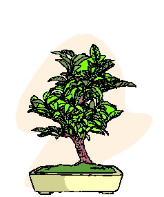 animiertes-bonsai-baum-bild-0006