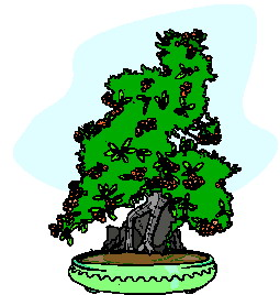 animiertes-bonsai-baum-bild-0009