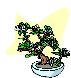 animiertes-bonsai-baum-bild-0011