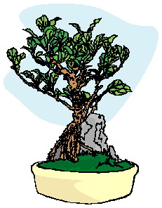 animiertes-bonsai-baum-bild-0014