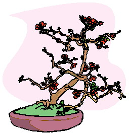 animiertes-bonsai-baum-bild-0016