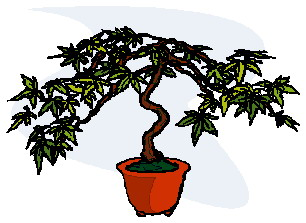 animiertes-bonsai-baum-bild-0017