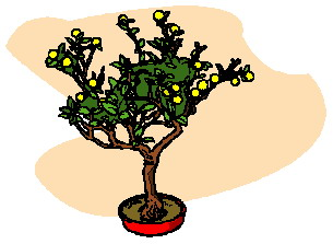 animiertes-bonsai-baum-bild-0020