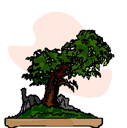 animiertes-bonsai-baum-bild-0022