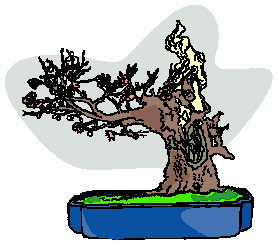 animiertes-bonsai-baum-bild-0023