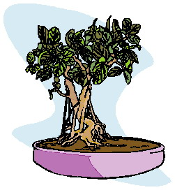animiertes-bonsai-baum-bild-0025