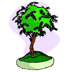 animiertes-bonsai-baum-bild-0027