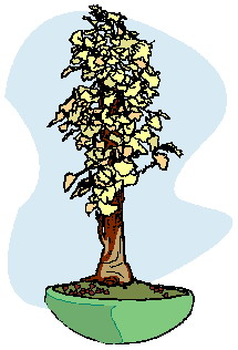 animiertes-bonsai-baum-bild-0028