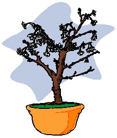 animiertes-bonsai-baum-bild-0030