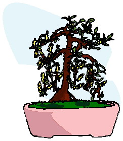 animiertes-bonsai-baum-bild-0031