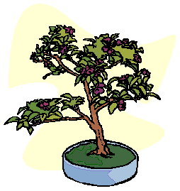 animiertes-bonsai-baum-bild-0032