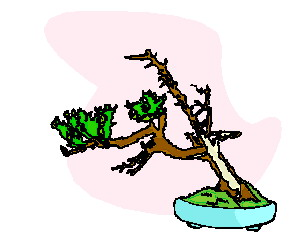 animiertes-bonsai-baum-bild-0034