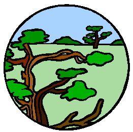 animiertes-bonsai-baum-bild-0038