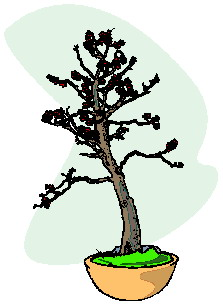animiertes-bonsai-baum-bild-0042