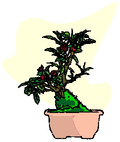 animiertes-bonsai-baum-bild-0043