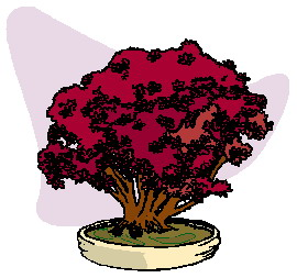 animiertes-bonsai-baum-bild-0044