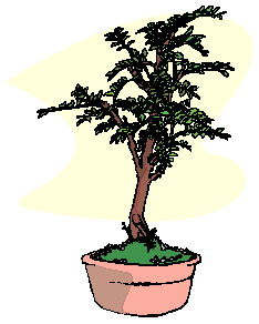 animiertes-bonsai-baum-bild-0045