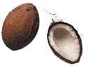 animiertes-kokosnuss-bild-0002
