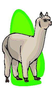 animiertes-lama-bild-0011