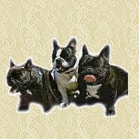 animiertes-franzoesische-bulldogge-bild-0004