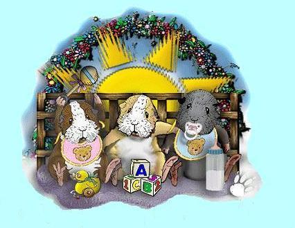 animiertes-meerschweinchen-bild-0034