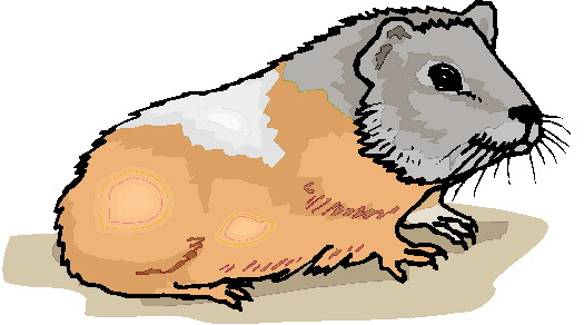 animiertes-meerschweinchen-bild-0037