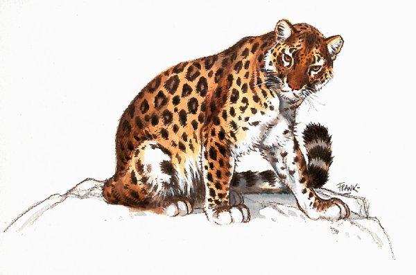 animiertes-leopard-bild-0017