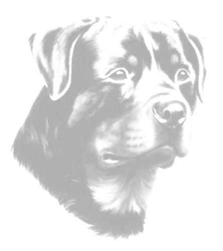 animiertes-rottweiler-bild-0019