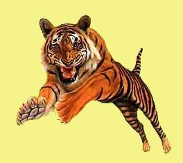animiertes-tiger-bild-0021