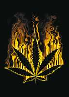 animiertes-hanf-weed-marihuana-bild-0007