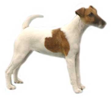 animiertes-jack-russell-terrier-bild-0007