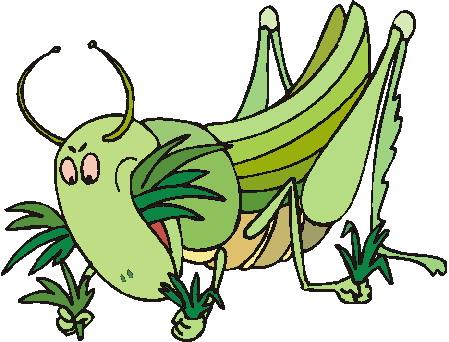 animiertes-grashuepfer-heuschrecke-bild-0009