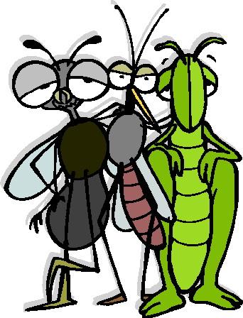 animiertes-grashuepfer-heuschrecke-bild-0026