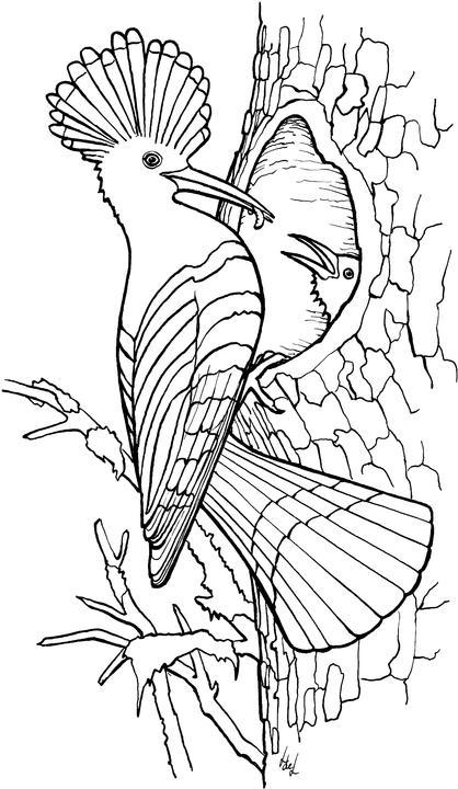 animiertes-vogel-ausmalbild-malvorlage-bild-0010