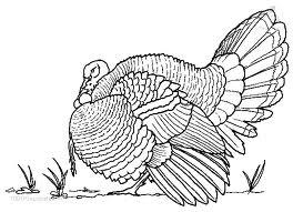 vögel ausmalbilder & malvorlagen: animierte bilder, gifs