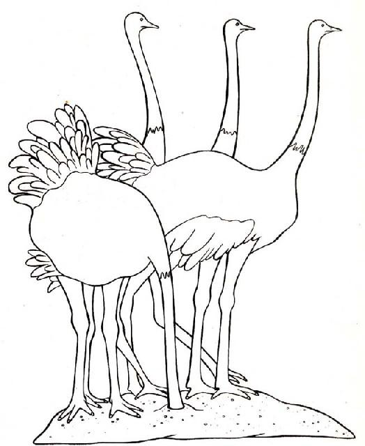 vögel ausmalbilder  malvorlagen animierte bilder gifs