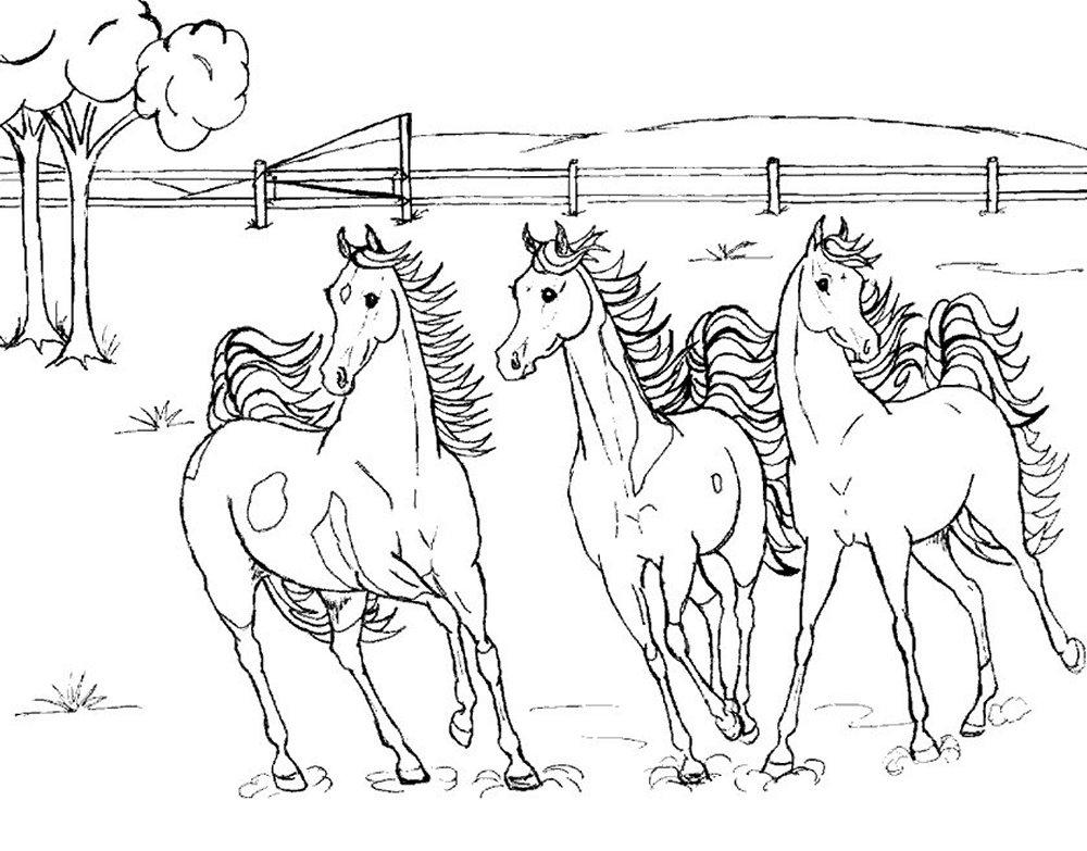 animiertes-pferd-ausmalbild-malvorlage-bild-0024