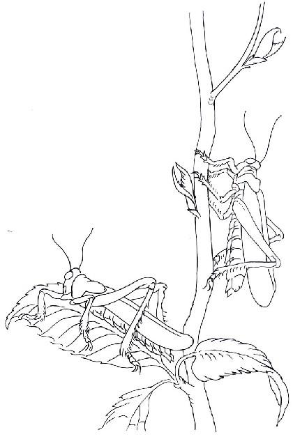 animiertes-insekt-ausmalbild-malvorlage-bild-0012