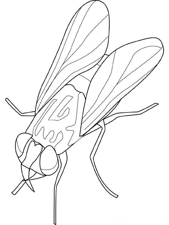 animiertes-insekt-ausmalbild-malvorlage-bild-0019