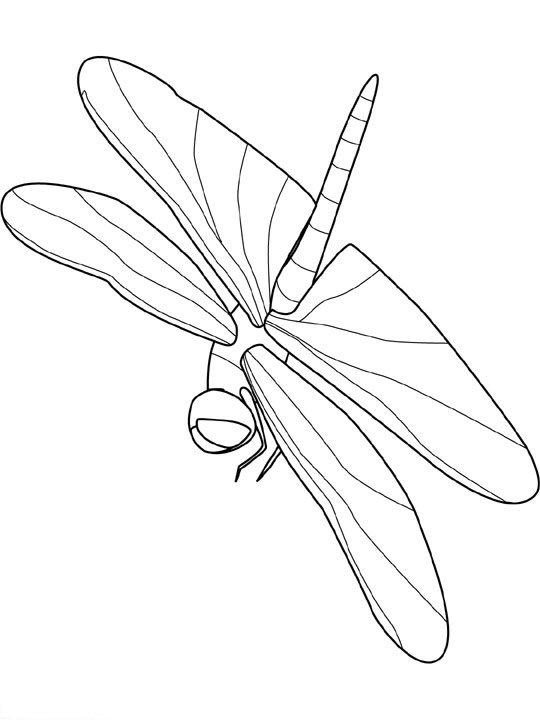 animiertes-insekt-ausmalbild-malvorlage-bild-0020