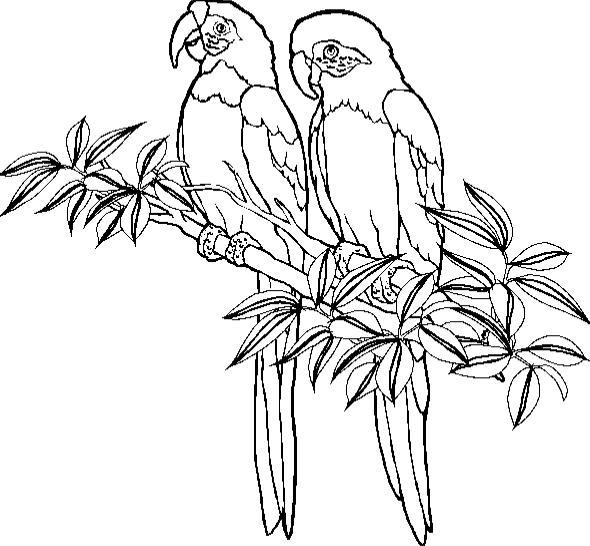 papageien ausmalbilder  malvorlagen animierte bilder