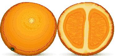 animiertes-orange-bild-0017