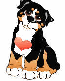 animiertes-berner-sennenhund-bild-0015